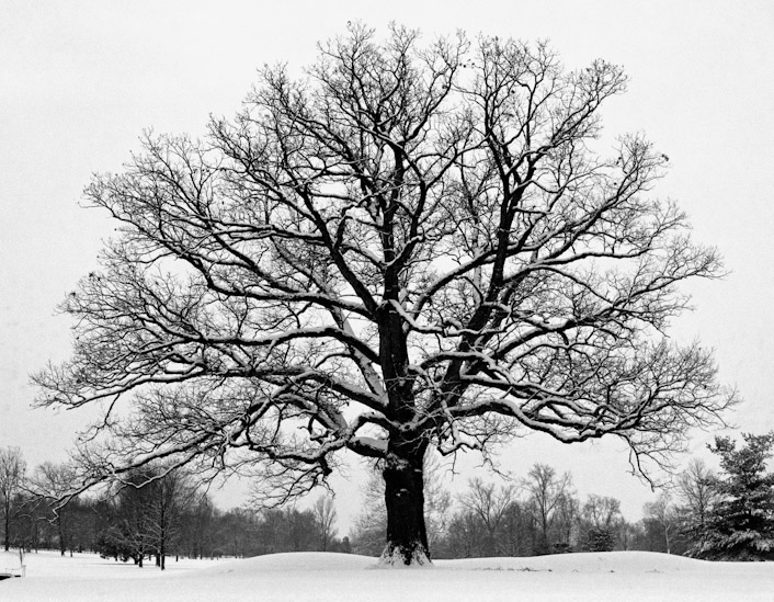 My original Snowy Tree photograph, taken in the late 1990's.