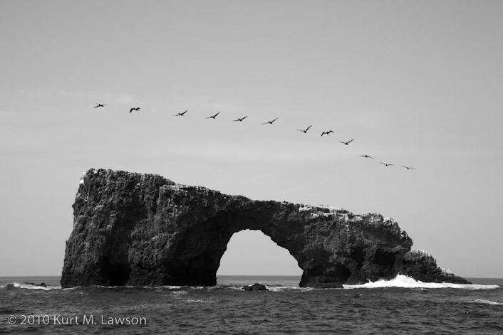 Arch Rock and Pelicans