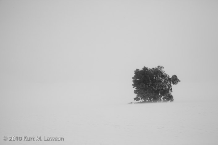 Whiteout and a tree