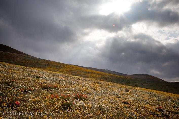 Sunbeams and wildflowers I