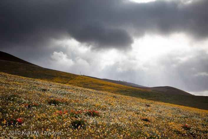 Sunbeams and wildflowers II