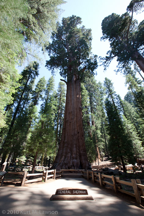 The General Sherman Tree. The largest tree on Earth.