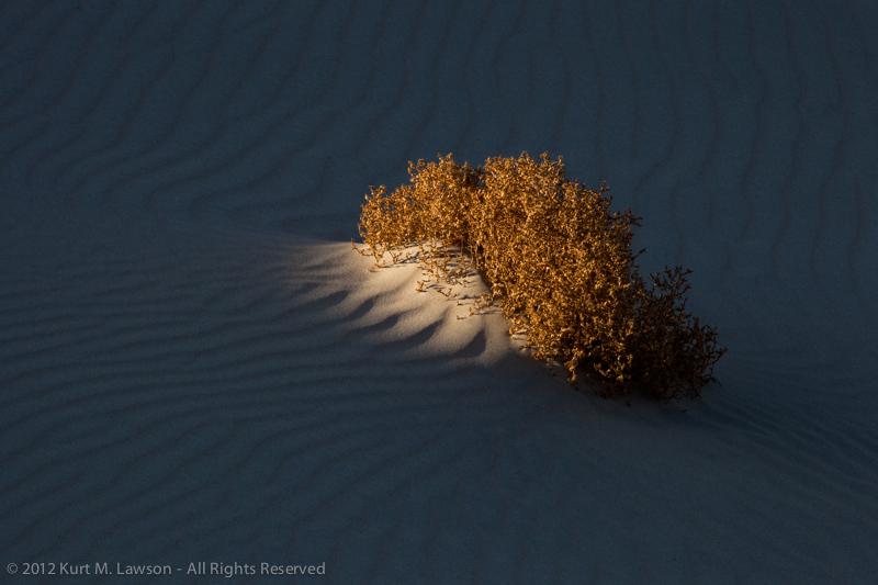 Dune Spotlight